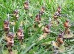 Banana Wars в «реальных» джунглях